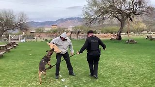 Meet Diesel, the newest Oro Valley police officer