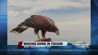 Hawk missing from Desert Museum - Video