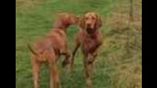 Paws For Thought: Dogs Play a Waiting Game in Battle Over Ball - Video