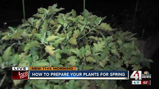 Before winter hits, learn how to prepare your plants for spring - Video