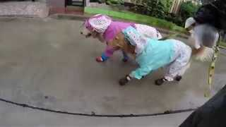 Stylish Pups Stay Dry in Wet Weather - Video