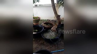 Dog splashing around in plant pots - Video