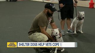 Shelters dogs helping veterans cope with PTSD - Video