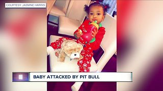 Investigation continues after pit bull attacks toddler