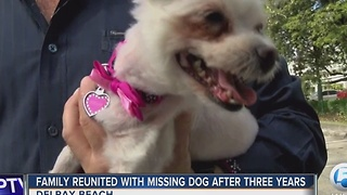 Family reunited with missing dog after three years - Video