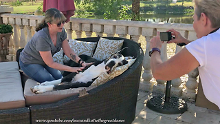 Happy Great Dane Relaxes with a Massage  - Video