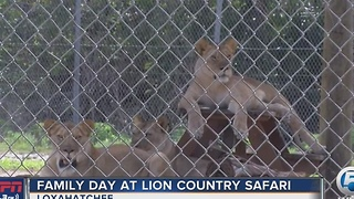 Family Day at Lion Country Safari - Video
