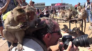 Cheeky monkeys jump onto photographer's head