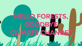 Newly discovered forests could prevent climate change - Video