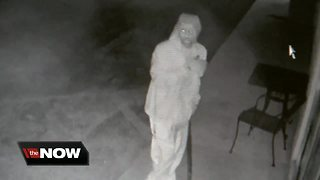 Thief smashes security cameras off Pizza, liquor shops in Valrico - Video