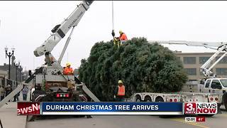 Durham Christmas tree makes its way to the museum - Video