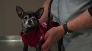 Keeping your pets safe for the holidays - Video