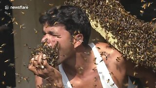 Indian Honey Collector Stuffs Shirt, Mouth With Live Bees - Video