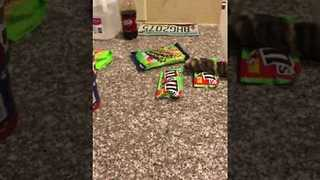 Cheeky Cat Steals All the M&M's, or Does He?