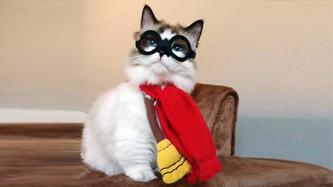 Tabby Potter: Munchkin Moggy Becomes Online Celebrity