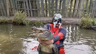A real dead pool! Blindfolded daredevil dressed as superhero catches and wrestles 8ft alligator - Video