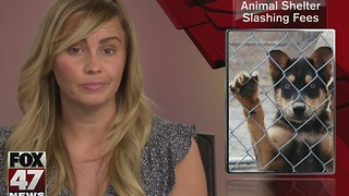 Ingham County Animal Shelter slashing fees - Video