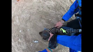 Kayaker in Namibia films himself rescuing multiple baby seals trapped in fishing nets
