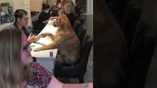 Pampered Pooch Receives A Pedicure