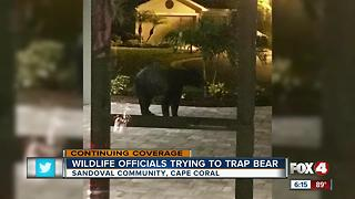 FWC sets trap for community bear - Video