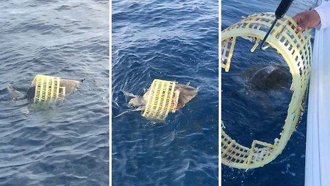 Fishermen to the rescue! Trapped sea turtle freed from plastic