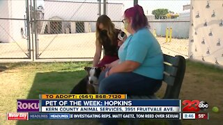Pet of the Week: Hopkins