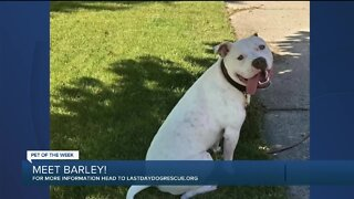 Meet Barley! Our Pet of the Week