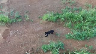 Drone Captures Rare Black Bear Sighting in Corydon, Indiana - Video