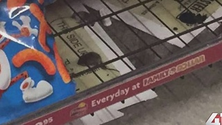 KC Family Dollar Store closed due to mice - Video