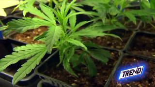 THE TREND: Could 10k signatures legalize medicinal marijuana in Kern County? - Video