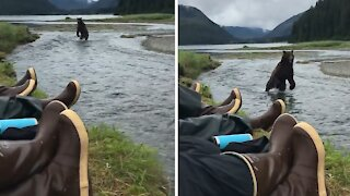 Extreme up-close brown bear encounter in Alaska