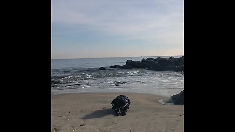 Needy dog photobombs owner's scenic video