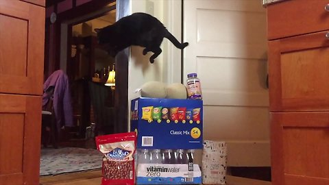 Crazy jumping cat leaps over various snack foods
