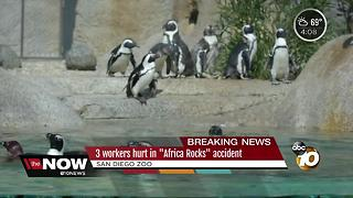 Three workers hurt at San Diego Zoo - Video