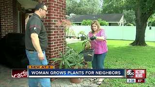 Plant Whisperer of South Tampa grows plants for her neighborhood