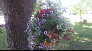 Wedding flowers stolen from Nampa business - Video