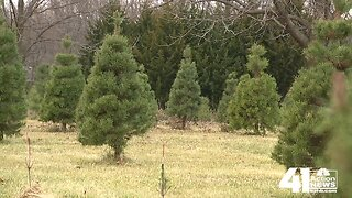 KC metro could see Christmas tree shortage this year