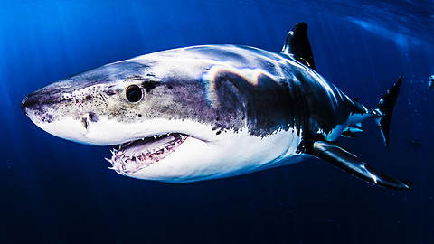 Some Sharks Live For 500 Years And Can Teach Us A Lesson
