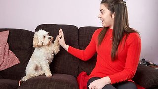 Pooch to the rescue – tiny fluffy pet becomes heroic assistance dog for disabled owner