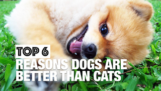 Why Dogs Are Better Than Cats - Video