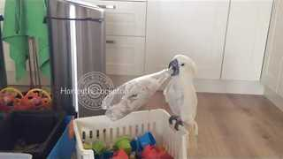 Cockatoo Enthusiastically Tries to Get Nuts From Plastic Bottle - Video