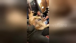 Dog can't control his legs during amazing belly rubs