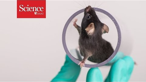 Are happy lab animals better for science?