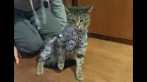 Things Aren't Quite the 'Cat's Pajamas' For This Feline