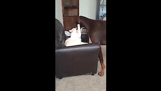 Dog and cat take turns grooming each other