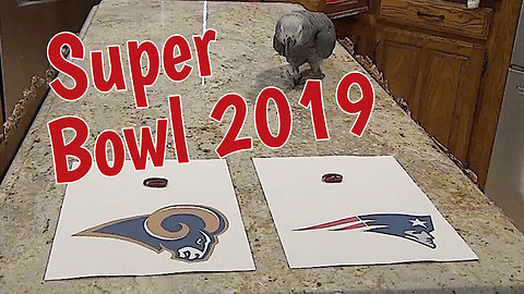 Psychic Parrot Predicts Super Bowl Winner