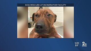 Dog found after cleaning a dumpster at city's incinerator