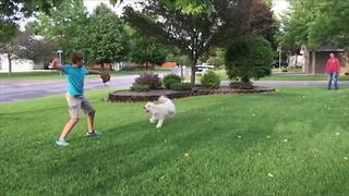 Funny Dog Tries To Fetch Invisible Ball - Video