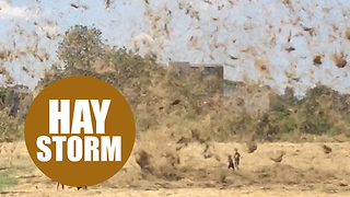 Hot air whipping up mass of hay and blows it around like tornado - Video