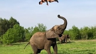 Man Somersaults on Elephant's Back